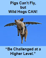 Pigs Can't Fly, but Wild Hogs CAN!